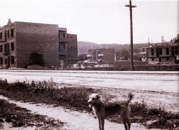 Le chien des McNulty, vers 1910. On aperçoit le côté ouest de la rue Hutchison et la rue Durocher, ainsi que le mont Royal, en arrière-plan. Les photos de triplex en construction, pendant cette période, sont très rares. Collection Vicky Robinson.